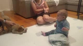 Excited Baby Meets Puppy for the First Time