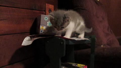 Unlucky kittens falling adorably off tray table