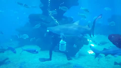 Aquarium Palma De Mallorca, Balearic Islands, Spain