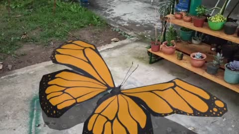 butterfly big very big butterfly