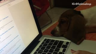 Dog tries to bite and bark at mouse cursor - Video