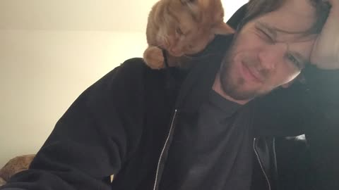 Shoulder cat vs. hoodie