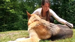Video Of Woman Petting Dog
