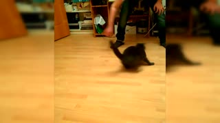 Drift cat #drift cat - Video