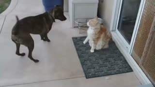 Cat has amazing patience with energetic dog - Video