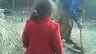 Little Girl want to hit small Buffalo  - Video