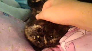 Cat getting a really nice scratch