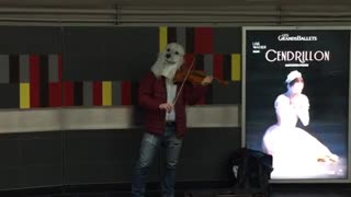 Woofgang man with dog mask plays violin - Video