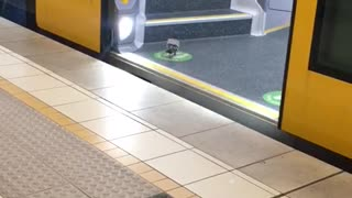 Pigeon Catches The Sydney Train