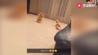 The dog is played with the cat together