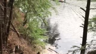 Rope swing guy falls directly into bank