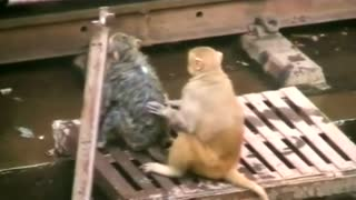Monkey to the rescue - Video