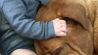 Baby and dog share incredible bond