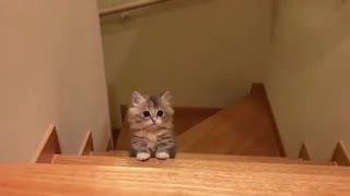 my cat is climbing up the stairs