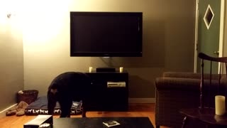 Dog attempts to turn on TV using a PlayStation 4 - Video