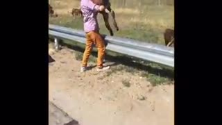 Helpless Foal Saved From Amazing Man On The Highway7 - Video