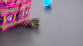Frog Hops Out Of Easter Egg - Video