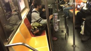People on train holding large lizards