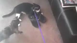 Trying to walk Captain Pickles  - Video