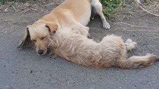 This Stray Puppy Lost His Partner - Video