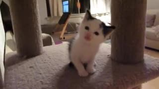 Is This The Cutest Meow Ever?? - Video