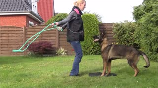 Cool dog trick- rope jumping  - Video