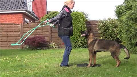 Cool dog trick- rope jumping