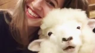 Girl taking selfie with lamb chewing laughs into camera - Video