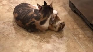 You won't believe this cat & prairie dog friendship! - Video