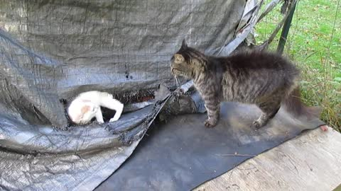 Little kitten stands up to bully cat