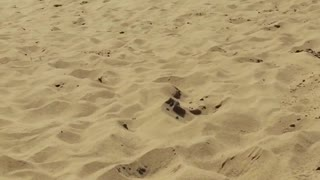 Collab copyright protection - sand dunes little boy face plants - Video