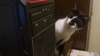 Cat's Mind Is Blown By The CD-ROM Drive - Video