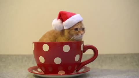 Small cat like a cup of tea