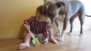 Baby gives dog peanut butter - Video