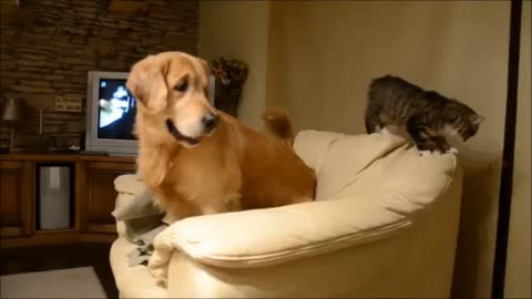 Dog and cat battle for spot on the couch