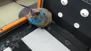 Cat Unsure Of Underwater Workout