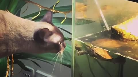 Cat and turtle share very special bond