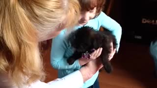 Little girl receives birthday puppy surprise