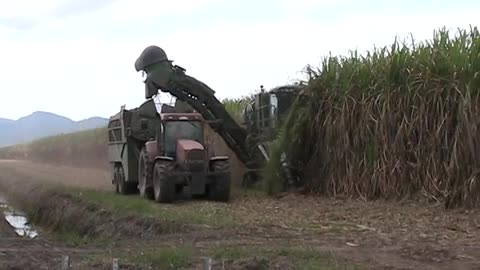 sugar cane harvester in australia