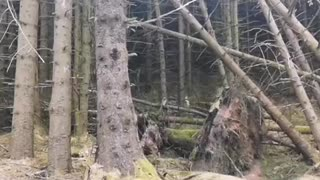 Forest passing