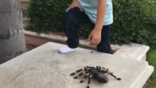 Parent scares toddler with fake spider  - Video