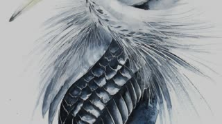 Watercolor Paintings Of Birds From All Over The World - Video