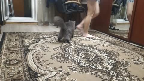 The cat bites by the legs