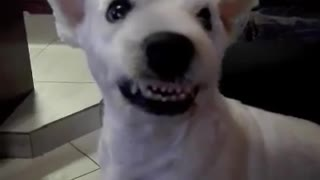 Irritated Dog Appears To Have An Evil Smile