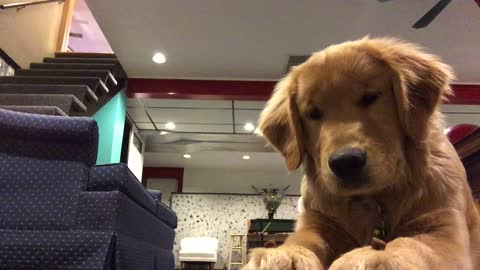 "Disciplined dog perfects the ""wait"" trick for the camera"