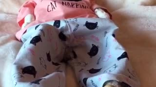 Cat NAPPIN - Video
