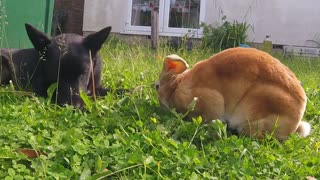 Puppy bonds with rabbit by eating grass together