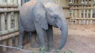 My new cute Elephant in my house - Video