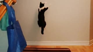 Watch this cat's impressive vertical leap in slow motion! - Video
