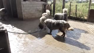 Dog Play with Water - Video